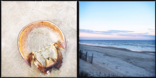 beachcollage2